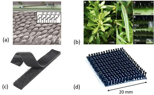 受蘑菇启发,科学家研发3D打印粘扣带