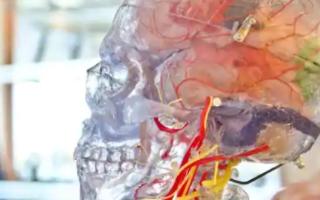 一项新研究揭示了您的大脑如何导航位置并监视同一位置的其他人
