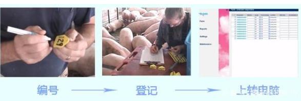 基于RFUD的养猪自动化电子饲喂站