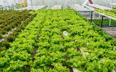 什么是精密种子发芽箱,它的作用是什么