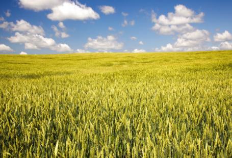 人工智能如何改善优化农业?