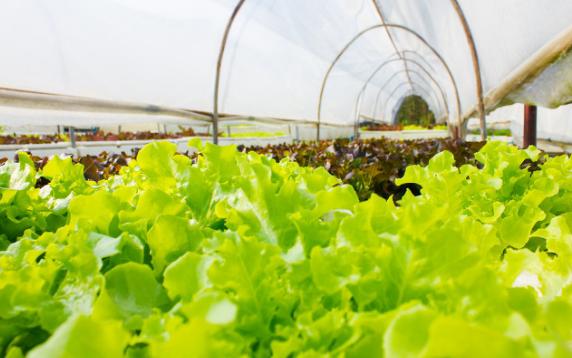 土壤水分监测系统是什么,它的作用是什么