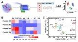基于磁控生物识别分子直接电位响应的聚合物膜电极生物传感新方法