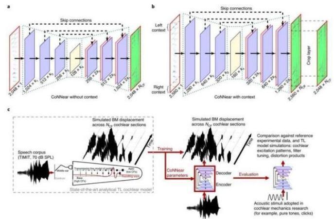 卷积神经网络与计算神经科学的结合