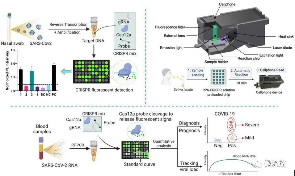 一种基于CRISRP技术的超灵敏、高通量COVI...