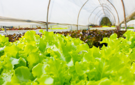 作物叶片形态测量仪在农业领域中的作用是什么
