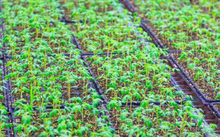 植物呼吸测定仪是什么,它的作用又是什么