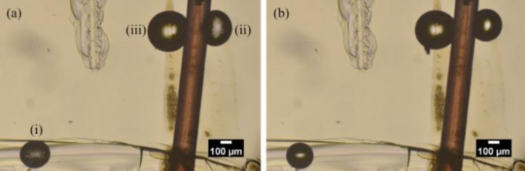 研究表明在水中引入超聲波更好地滅菌