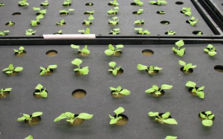 智能孢子捕捉系统可以监测捕捉哪些植物病害