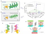 利用渦旋光檢測結構手性研究領域取得重要進展