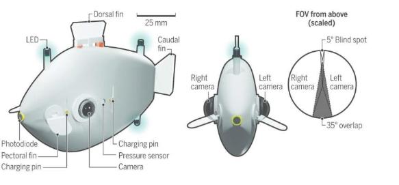 哈佛大学研究团队从鱼群当中获得灵感,并研发出了一批鱼类机器人