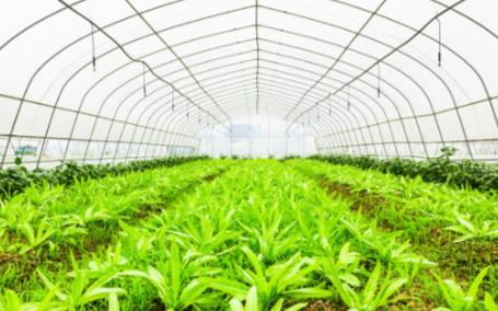 种子发芽室的应用可进一步确保种子的发芽率