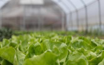 如今温室大棚已在现代农业生产中得到了广泛使用