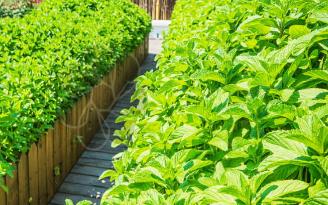 浅谈农贸市场农残快速检测设备的使用