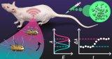 美因茨约翰内斯·古腾堡大学的研究人员开发了一种植入式生物传感器