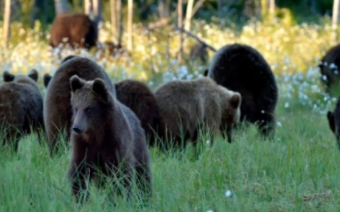 智能野生动物追踪和监测系统的6大好处