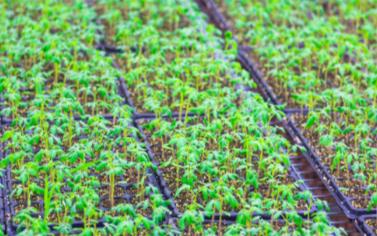 種子低溫低濕樣品柜(儲存種子樣品)的功能特點