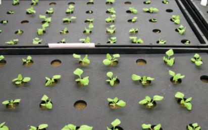 种子风选净度仪的应用可有效提升种子净度