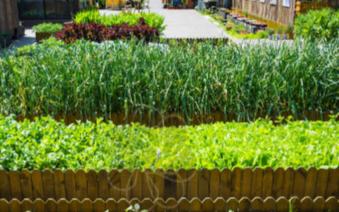 种子发芽箱是什么,它的作用是怎样的