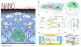 北航利用基于微孔陣列的納米芯片解析肺癌細胞基因突...