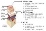 陈天桥雒芊芊研究院在脑电波研究上获得重大突破