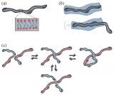 DNA也可以用来构建柔性材料?