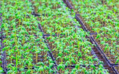 土壤动力取样器的参数及其作用的说明