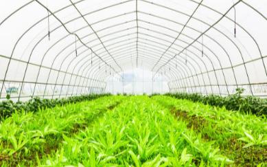植物病害检测仪的应用领域以及使用效果的介绍