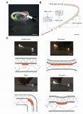 27岁女孩研发出一款可拉伸分布式光纤传感器