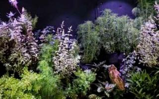 植物照明市場是崧盛股份今年重點發展的領域之一