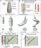 新型人工肌肉:模仿舌头与象鼻,伸缩弯扭全都行