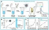 中国科学院研发出检测病毒和蛋白相互作用的磁性生物传感技术