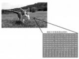 简单图像处理:用用二值化吧!