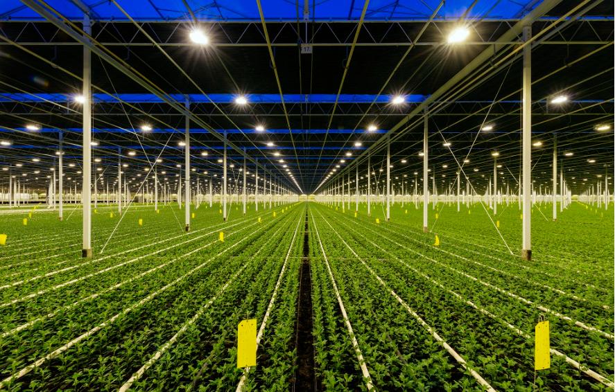艾迈斯欧司朗推出新款白光LED,提供高效植物照明解决方案