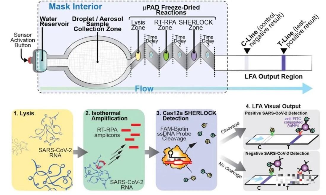 分享一种基于CRISPR技术检测新冠病毒的原型口罩