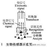 探秘仿生传感器的定义及工作原理